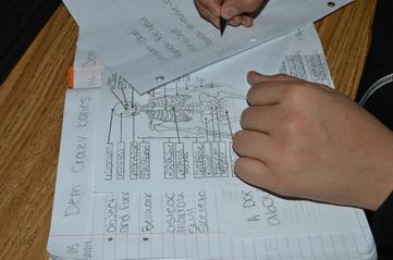 skeletal system notes worksheet