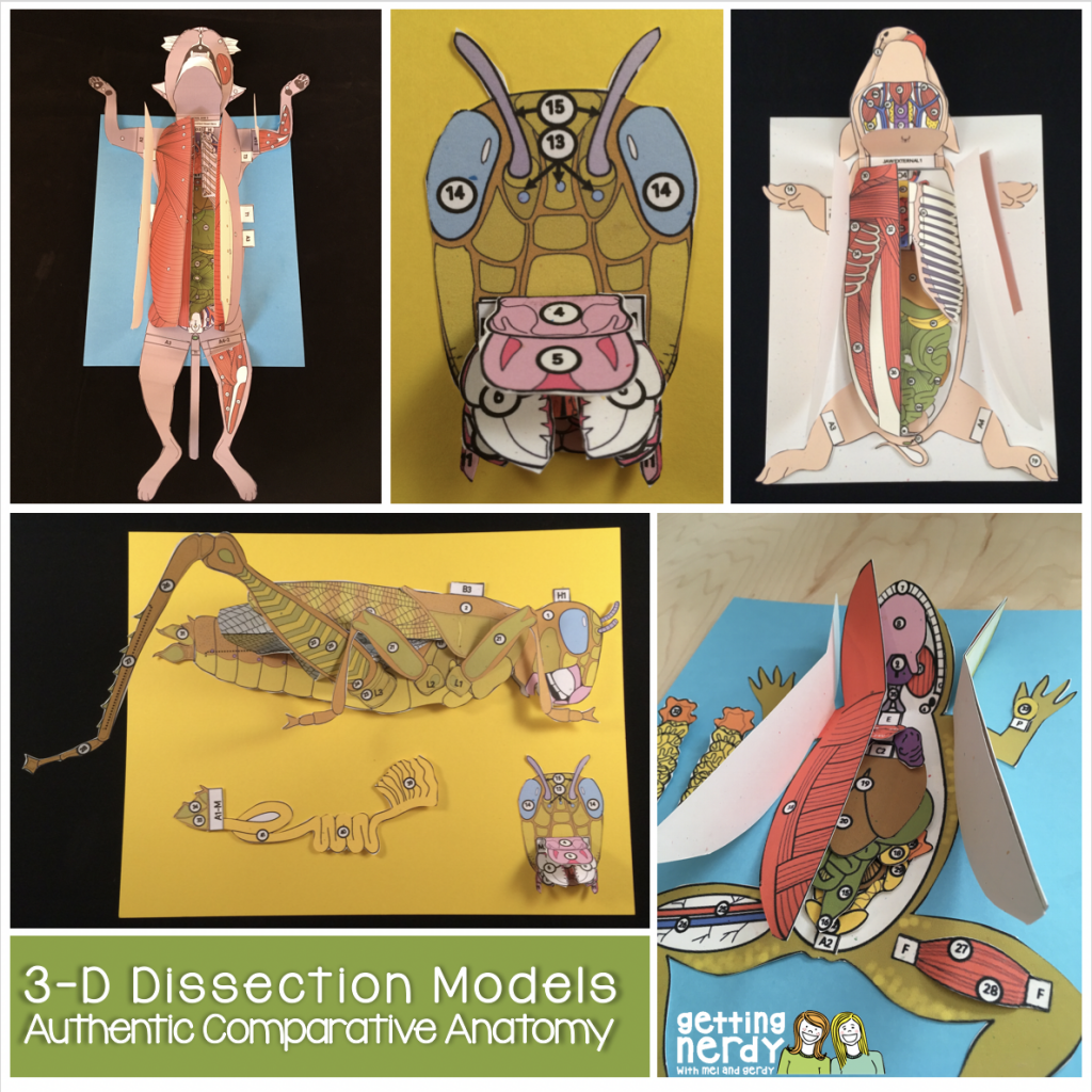 3-D Dissection Models from Getting Nerdy