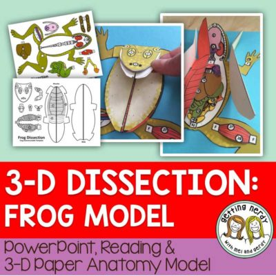 3-D-Dissection-Model-Frog
