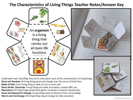 Human-Body-Systems-Interactive-Notebook-Activities-2