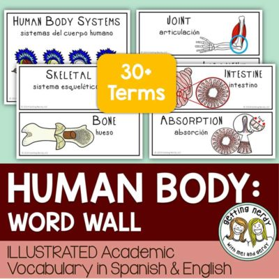 Human-Body-Systems-Word-Wall