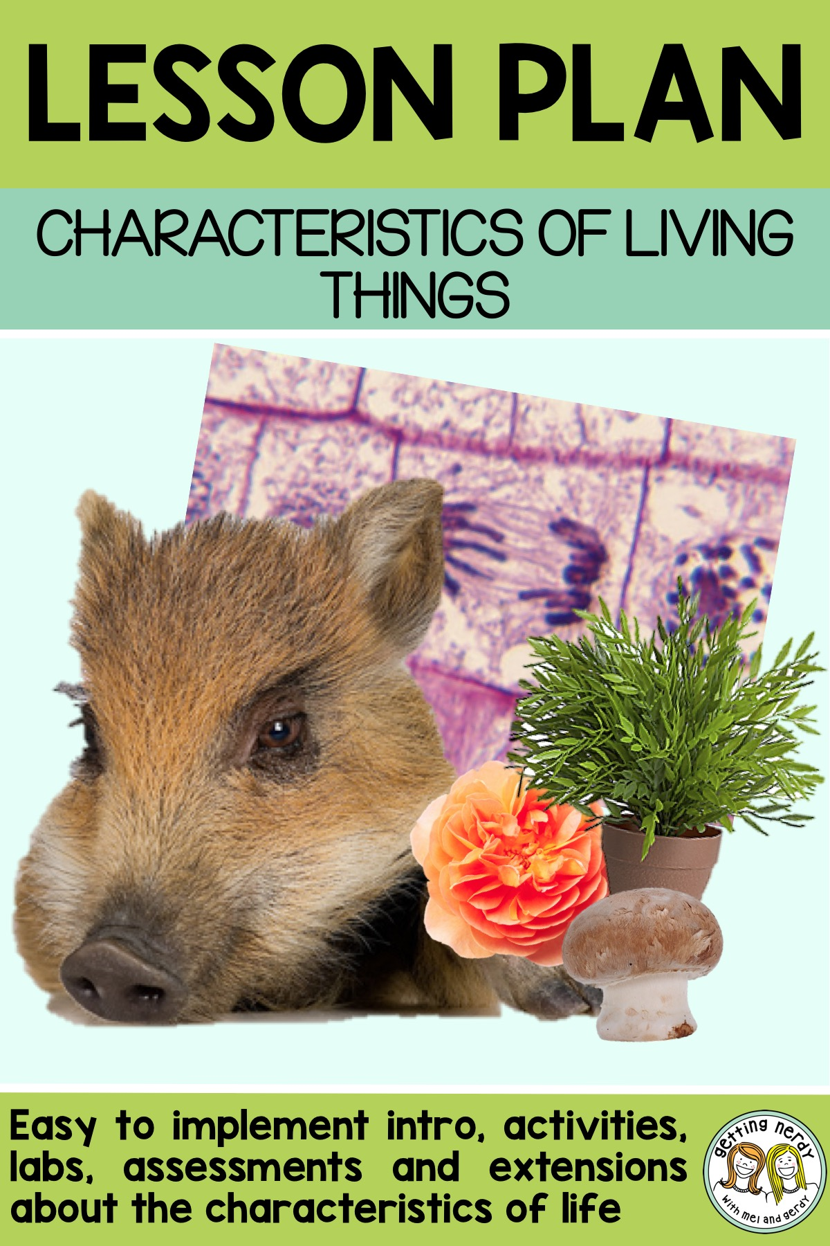 Lesson Plan: Needs and Characteristics of Living Things